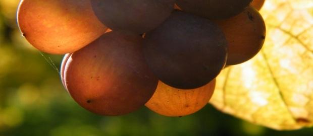 Weinhaus Fabio: Bioweine aus der Pfalz