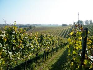 Termine für Weinproben