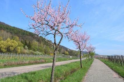 E-Bike in der Pfalz fahren