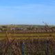 Termine 2019 für Terriorwanderungen mit Weinprobe in der Pfalz